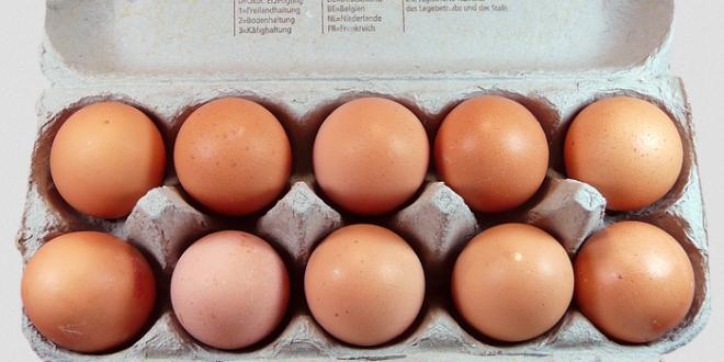 Eierkarton 660x330 - Der Karton – ein vielseitiger Geselle