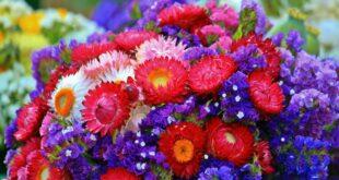 Trockenblumen – Blütenpracht für die Ewigkeit